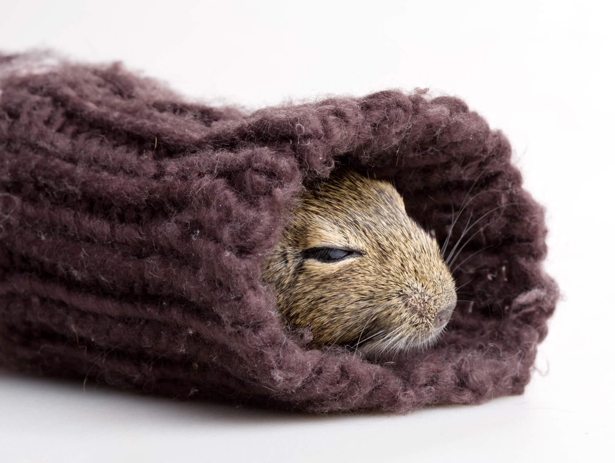 寒さ対策をするハムスター