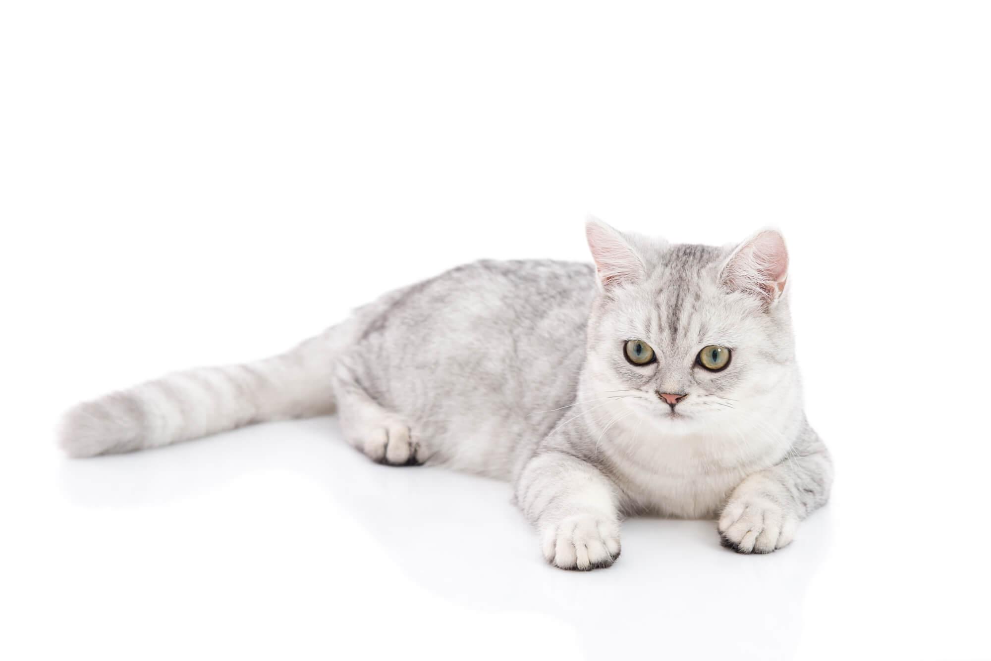 トイレ砂を食べてしまった猫