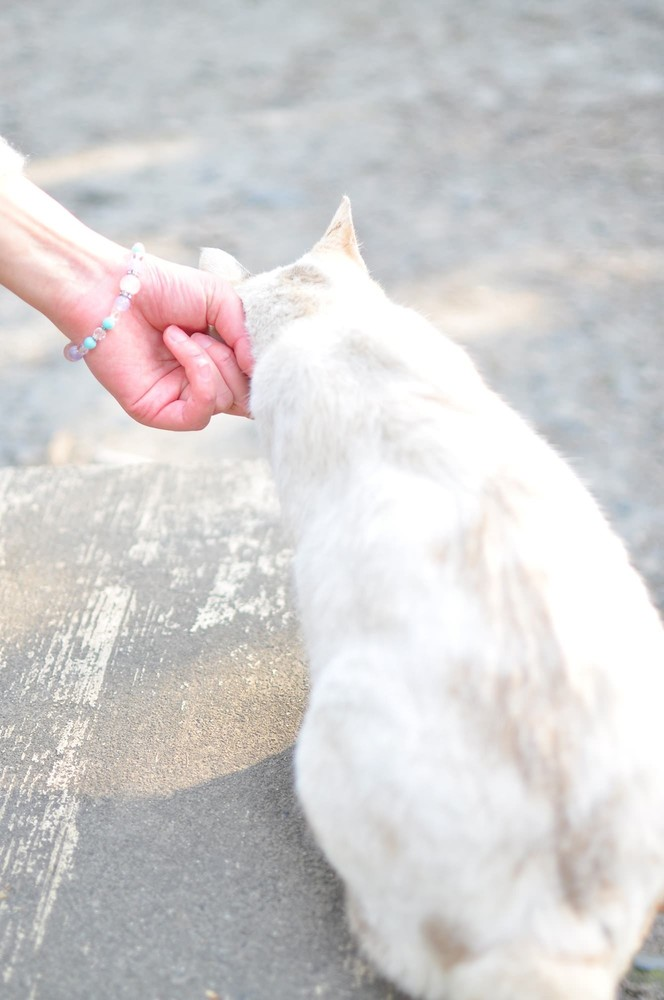 猫が人についてくる心理まとめ。甘え、エサが欲しい、飼い主 ...